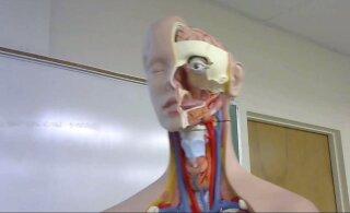 ВИДЕО | Испанская учительница учит детей анатомии, сделав учебным пособием... себя