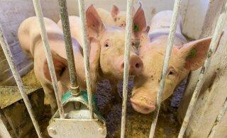 Hiina keelas Kanadast imporditavad lihatooted