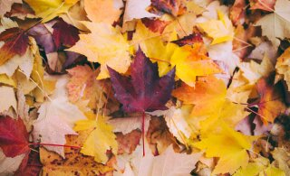 Прогноз на осень: стоит ли ждать бабьего лета или придется свыкнуться с холодами