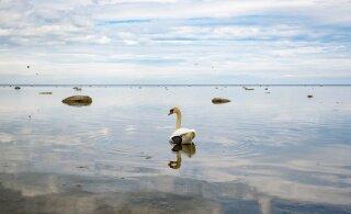 ГЛАВНОЕ ЗА ДЕНЬ: смерть лосося, новые карантинные меры и планы на Штромку