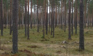Veel üks Eesti suusamaraton jääb ära