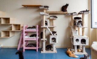 В Ласнамяэ проходит сбор корма и вещей для животных из приютов