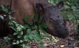 Loomaaia külastajad saavad panustada haruldaste liikide säilimisse looduses