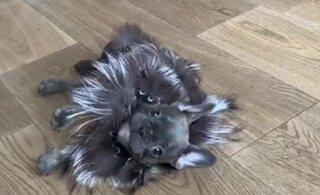 Анфиса Чехова осчастливила собаку