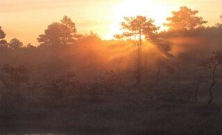 Leili metsalood | Päevatõus rabas