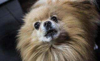 ВИДЕО | Собаке дали щепотку корма вместо нормальной порции. Ее реакция бесценна!