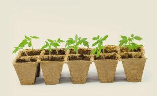 SUUR LUGU | Kevadised seemneuudised ja üksikasjalikud juhendid taimede ettekasvatamiseks