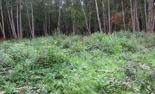 Eesti teadlaste uuring: metsaraie ei suurendanud mullasüsiniku eraldumist