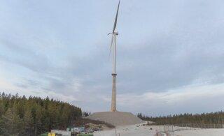 Sõnajalad: Aidu tuulepargis tekkiva katastroofi eest vastutavad ametnikud