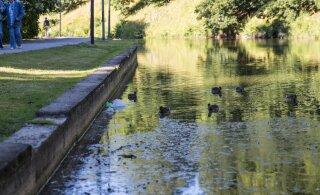 Из столичного пруда Шнелли откачают воду. Зачем?