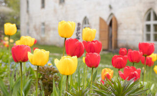 Igatsed kevadet? Just see imeline lillemeri Kirnas võitis inimeste südamed