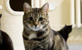 Teesi lugu   surmahirmust üle saanud kassi koduootus on kestnud juba jahmatavad kaks ja pool aastat ning kestab veelgi