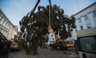 ФОТО и ВИДЕО | В центре Тарту установили рождественскую елку