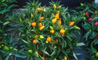 Яркие и прекрасные: 5 растений, которым понравится у вас на кухне