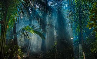 """""""Mida lähemale me inimtühjale džungliteele jõuame, seda rohkem hakkab mulle tunduma, et me teeme midagi keelatut."""""""