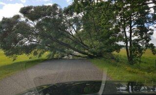 В Пярнумаа двух человек придавило упавшим деревом