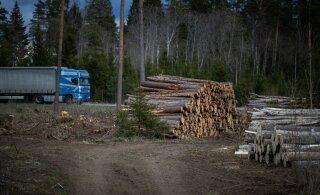 Министр: утверждение, будто лес в Эстонии вырубают быстрее, чем он вырастает, — не отвечает действительности