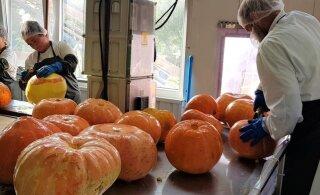 Soomlased söövad ära enamiku Eesti kõrvitsatoodetest
