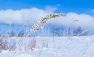 Uuel nädalal lumesadu lõpeb ja külmakraadid langevad