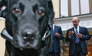 ГРАФИК: Путин и Меркель, не считая собаки. Как президент РФ демонстрирует власть