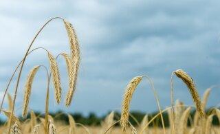 26. juunini saab riigilt taotleda põllumajanduskindlustustoetust