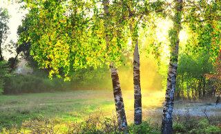ALKEEMIA TAROSKOOP APRILLIKS: Mis ootab sind jürikuul ees armastuse, töö ja tervise osas?