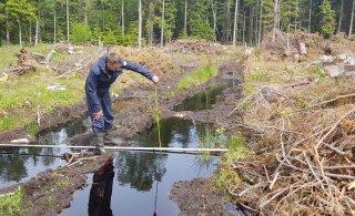 Avalikkusel on mure, kas ei raiuta liiga palju. Millised on tegelikud keskkonnarikkumised metsas?