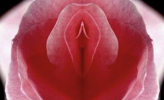 Vau! See lihtne meetod võib aidata sul oraalseksi teel kogeda 3 minutit kestvat orgasmi