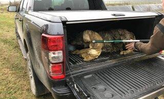 ФОТО | На ферме в волости Элва спасли застрявшего в навозной жиже волка