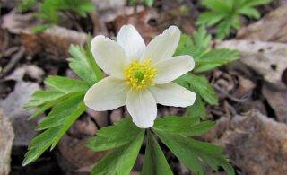 Leili metsalood | Kevadmõtteid