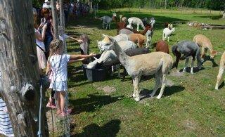 Tosin praktilist soovitust sel nädalavahetusel avatud talude päeva külastamiseks