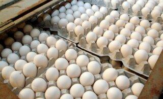 Loomakaitsjad kutsuvad tarbijaid munadepühi puurivabalt tähistama