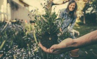 3 растения, которые отпугивают клещей и блох
