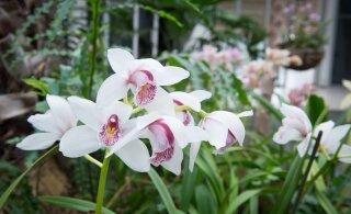 Первого июня дети смогут бесплатно посетить Таллиннский городской музей и Ботанический сад