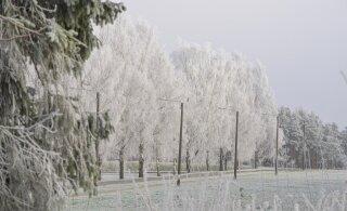 Теплу конец: к выходным сильно похолодает и даже выпадет снег