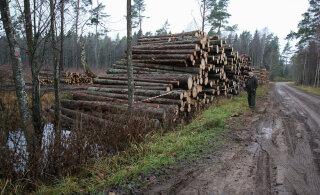 """Eaka metsaomaniku Hiiumaa metsas oli plaanis veel suurem röövraie. """"Tädi pidi ära surema. Ei uskunud enne kui nägi."""""""