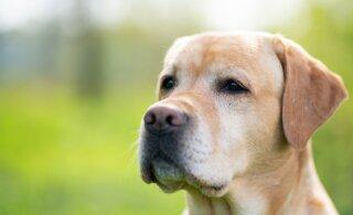 ВИДЕО | Хозяйка узнала, чем заняты собаки в ее отсутствие