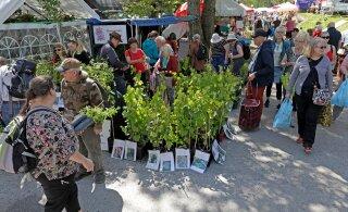 LAADAFOTOD | Türi lillelaat meelitas kohale bussitäite kaupa soomlasi ja rootslasi