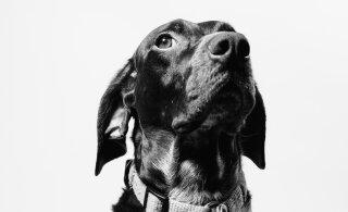 Kasulikud nipid, kuidas muuta majapidamine eakale koerale elamisväärseks