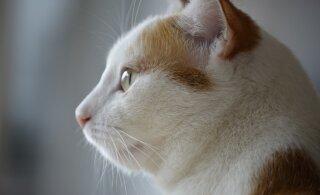 Mis toimub sinu kassi peas? Millest ta mõtleb?