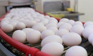 Kaupmehed: saabuvad lihavõttepühad valgete munade hinda ei tõsta