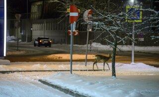 Теплая зима и интенсивное движение на дорогах убивают тысячи диких животных