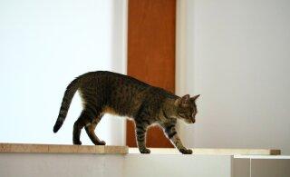 Kummaline käitumisharjumus: miks kassid vahetpidamata oma tagumikku inimese nina alla sätivad?