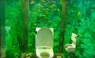 В окружении рыбок: самый необычный туалет нашли в Японии