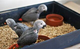 Suled paljastavad illegaalse linnukaubanduse