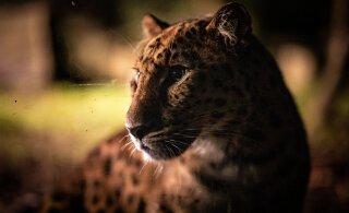 Романтика и брачные игры. 8 причин посетить Таллиннский зоопарк именно осенью