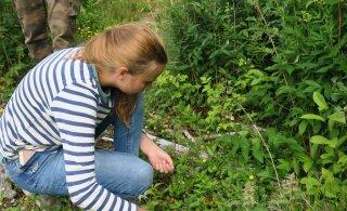 Lii Sammler: kõige enam looduslikku mitmekesisust on näha jaanieelsel raielangil