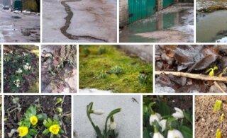 ФОТО ЧИТАТЕЛЕЙ | Сильная оттепель оставила по всей Эстонии знаки весны