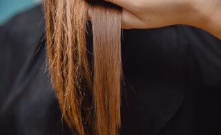 Juukseotsad lähevad kergesti katki? VIIS head moodust juukseotste tervena hoidmiseks