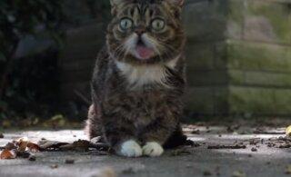 Armastatud staarkass Lil Bub on meie seast lahkunud